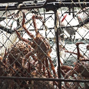 North Alaskan crab fisheries are among those most at risk from ocean acidification.